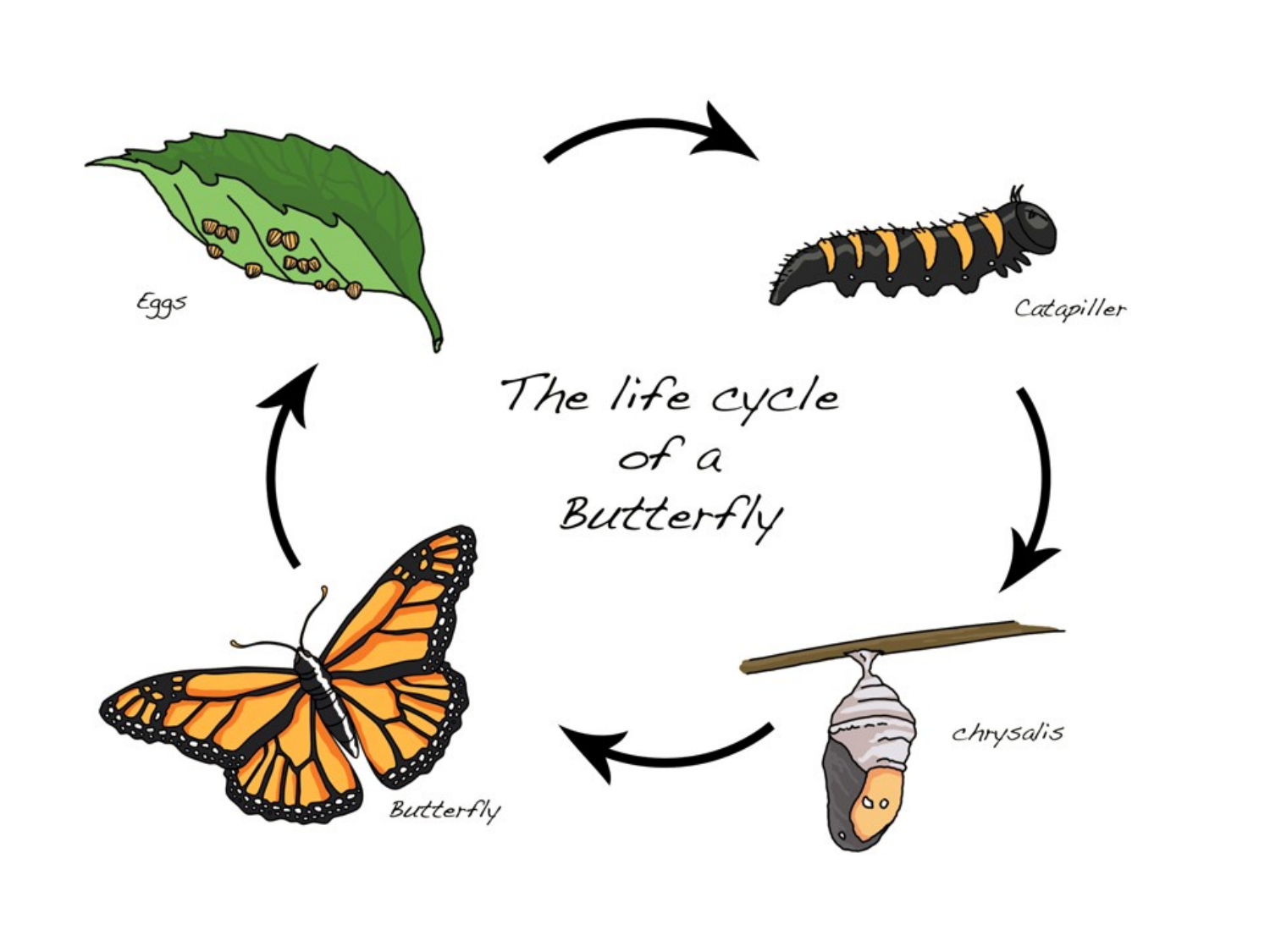 butterfly life cycle book pdf