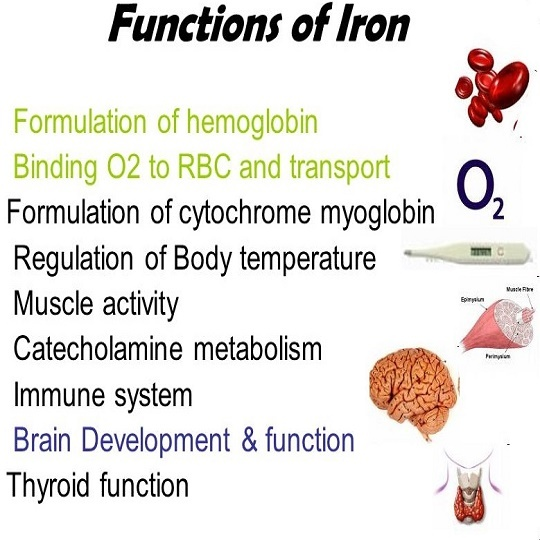 functions of iron in the body pdf